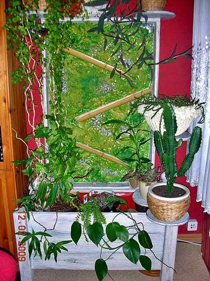 Уголок комнатных растений в квартире
