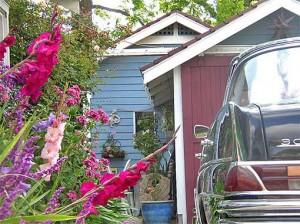 цветник гладиолусы