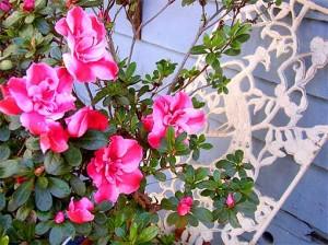 цветы оригинальная изгородь