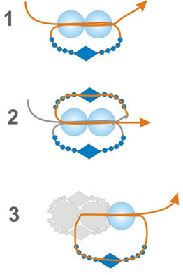 схема изготовления колье из бисера и бусин.