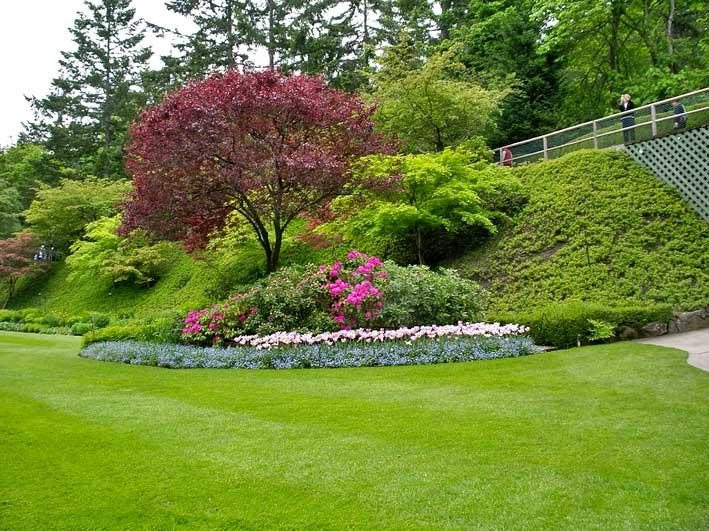 японский сад клумба