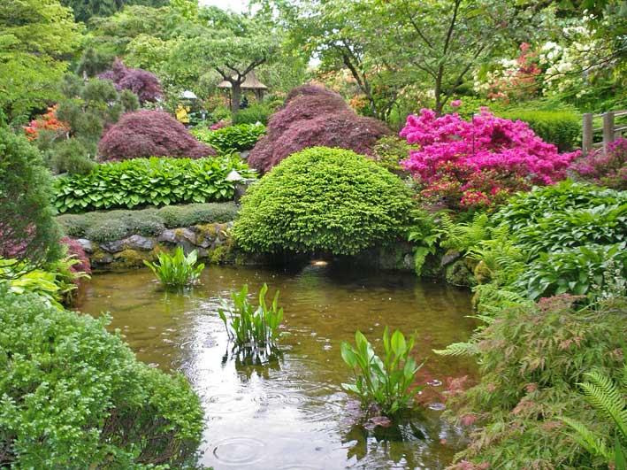 японский сад - пруд в окружении кустарников