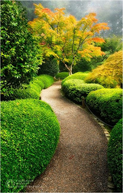 Гравийная дорожка в японском саду