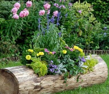Клумба в деревянном бревне