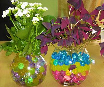Комнатные цветы в гидрогеле
