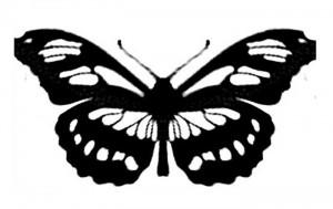 трафарет бабочки бесплатно 4