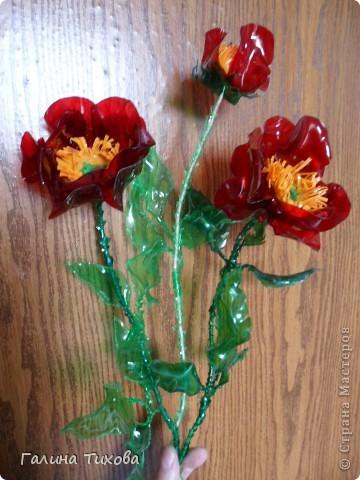 Цветы маки из пластиковых бутылок 3