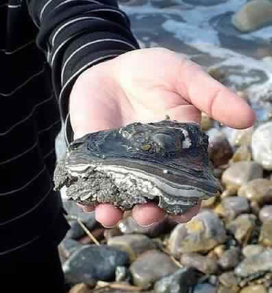 Камни для небольшого прудика