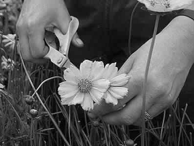 Срезаем цветы для мини прудика